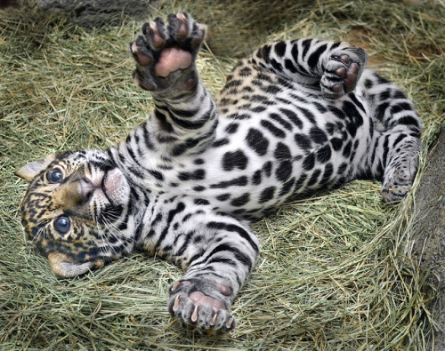 Paws and play by Stinkersmell on Flickr.