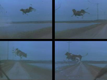 Today I watched the film Twister for likely the 25th time. I notice something new with each consecutive viewing, most recently that the entire fucking plot takes place over the span of just one day. Bill shows up with his new fiancée and then betrays her by professing his love for Jo in what I understand to be about 6 hours.