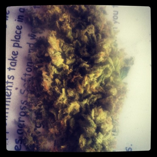 #weed #kush #haze #420 #THC #blunts #bongs #bitches #pipe #girlsandweed #stonergirls #instaweed #weedporn #ass #swag #obey #fresh #dope #dank #nug #bud #girlsandweed  (Taken with Instagram)