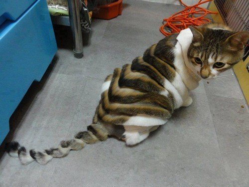 Poor kitty!! This is so freaky looking!