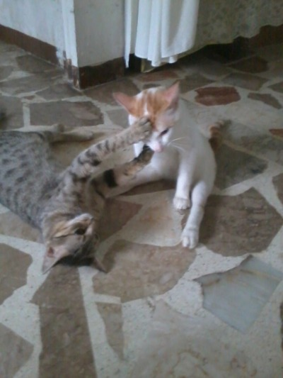 this is our cats RINGO and POLARIS.. polaris said.. BLESS YOU RINGO.. LOL
