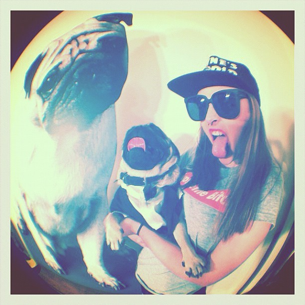 #supreme #pug #lyfe (Taken with Instagram)