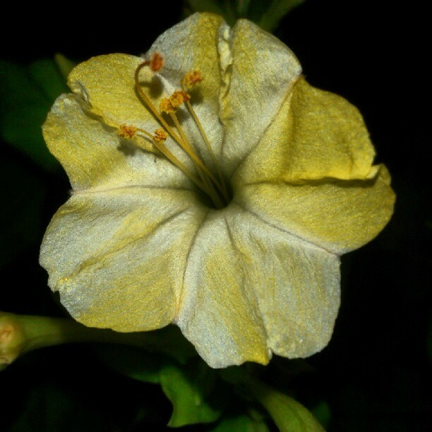 stoneed:  #yellow #flower (Taken with Instagram)