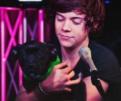Imagine: Adopting a doggy with harry