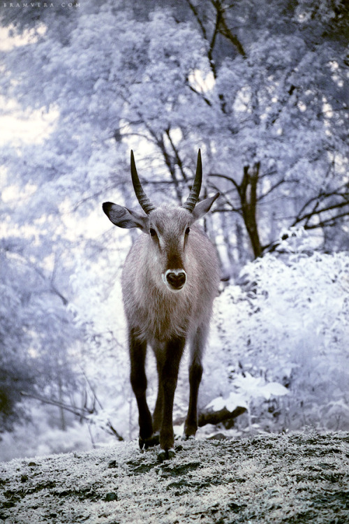 captivating-animals:  Animal Kingdom in Heaven 01 by =brumie
