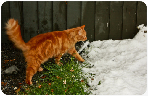 Rusty meets snow