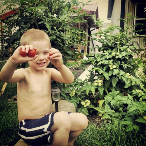 My lil Gardner, planted the seeds & picked his first ripe tomatoes :) (Taken with Instagram)