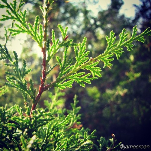 I took this awhile ago on the nature trail on campus.  (Taken with Instagram at University Of West Florida Nature Preserve)