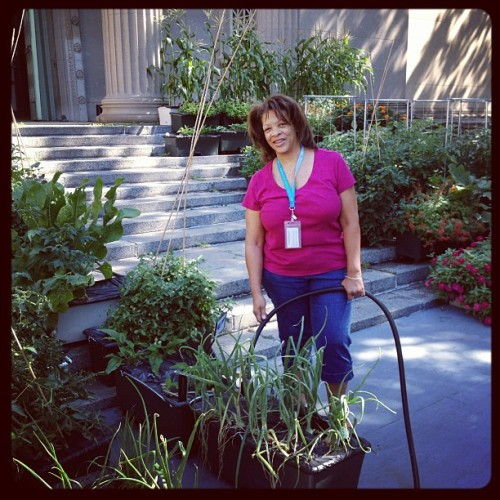 Susan, a Master Gardener watering our 80 earthboxes at Smart Home (Taken with Instagram at Smart Home)