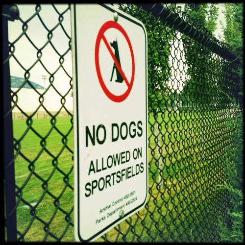 No Dogs Melodie Lens, Sugar Film, No Flash, Taken with Hipstamatic