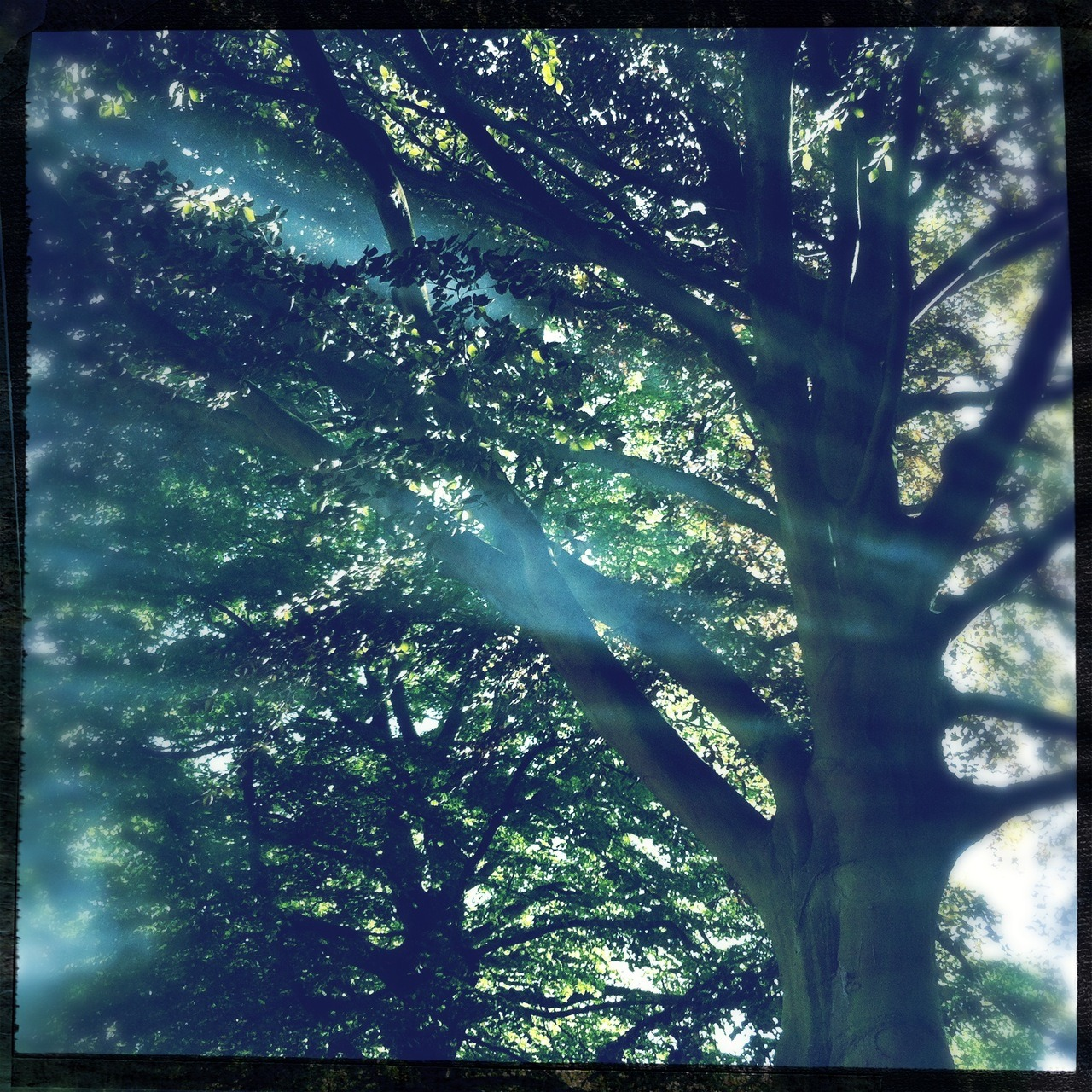 #trees #mist #sun #evening #summer Americana Lens, Big Up Film, No Flash, Taken with Hipstamatic