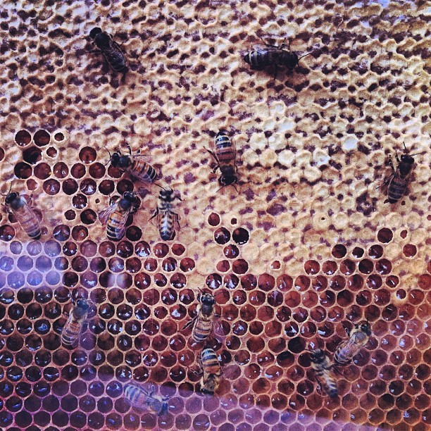 #toronto #bees (Taken with Instagram)