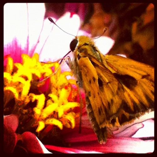 Moth wings.  (Taken with Instagram)