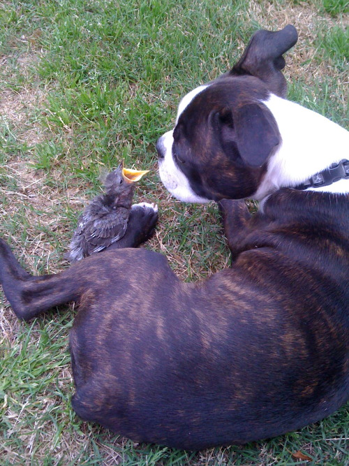 baby dog meets baby bird