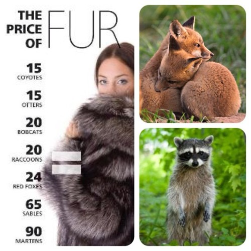 Fall is approaching and we need need everyone to take a stand against fur. ✊  Pledge to go fur free!  www.furfreela.com