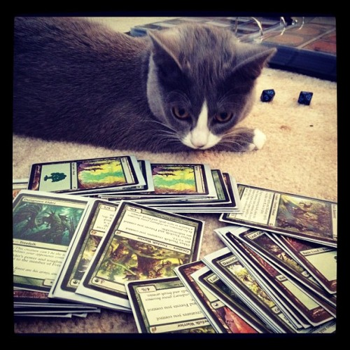 Kitten says it's Magic time! #geekery (Taken with Instagram)