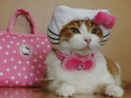 Hello Kitty Cat! :D