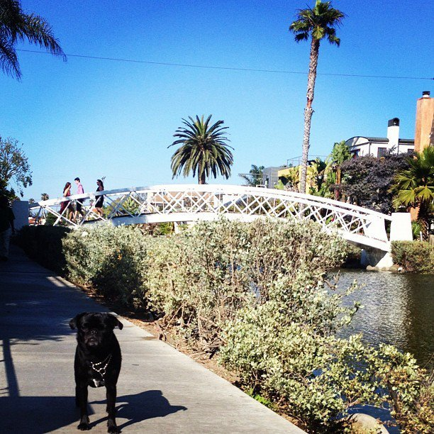 my little boo on her Venice Canals walk