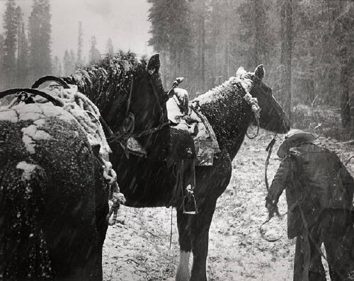 anglophilelizz:  Chilcotin region, B.C., 1954 (horses in snow) Gelatin Silver Print Richard Harrington