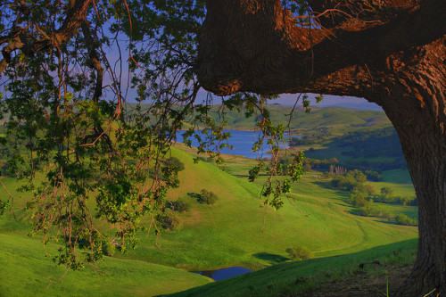 hilltop view from under an oak by Marc Crumpler (Ilikethenight) on Flickr.