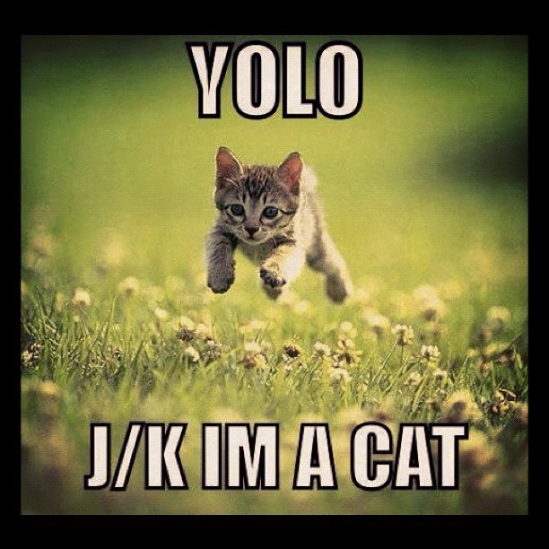 ROFL. 😂 #cats #yolo #kitty #funny #gokitty (Taken with Instagram)