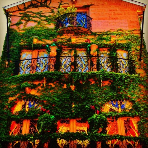 Fell in love with this home in #chinatown today. #pretty #ivy #house #peacock #Chicago #balcony #fairytale  (Taken with Instagram)
