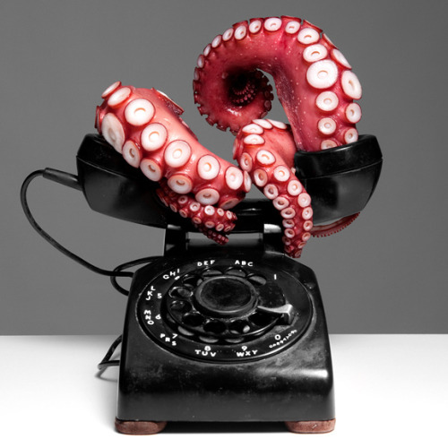 clock-defacing:  Octopus Telephone on Flickr. tentacle talk, dali lobster telephone