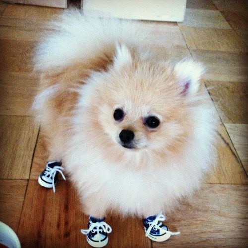 thedailywhat:  It's Sundog! [fluffingtonpost]  Because shoes.