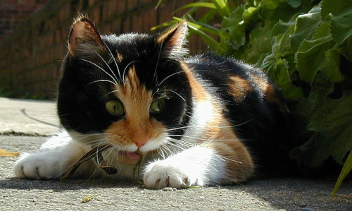 Splotch Cat by tompagenet on Flickr.