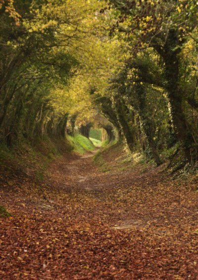 serenade-of-self-destruction:  seabois:  Tree tunnel path to Holnaker Mill, West Sussex, England  It looks like the shot of the Hobbits on the road after they fall off Farmer Maggots farm … I can actually hear the Nazgul screaming … I've watched LotR way too much :P
