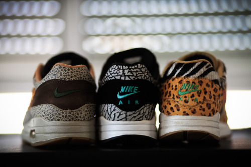 Safari, Elephant, Animal  AM1's  all three faves