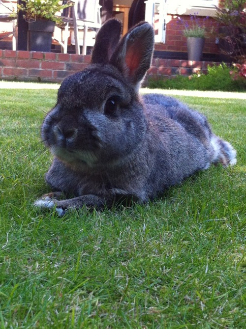dailybunny:  Bunny Spends Bunday Relaxing on the Grass Happy Bunday! Thanks, Richard!