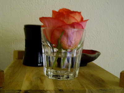 Still life with rose.
