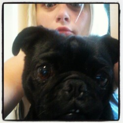Adorable #Vader #pugs #pug #pugsofinstagram #StarWarsPets #instasheila  (Taken with Instagram)