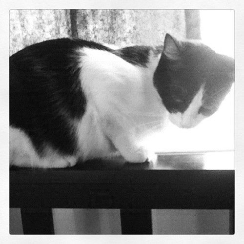 I miss my kitty (Taken with Instagram)