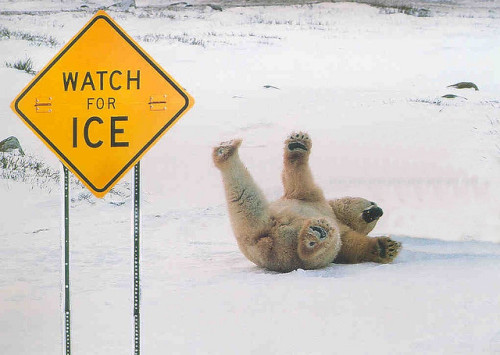 1iberated:  Watch For Ice!!! by atownjacket on Flickr.