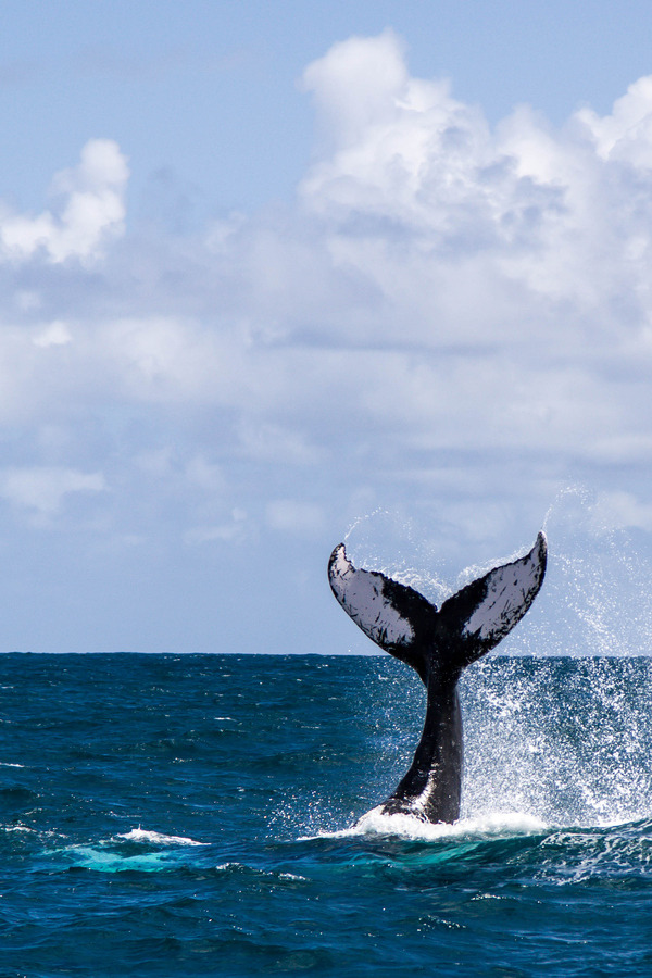 "animals-of-the-world:  (via 500px / Photo ""Whale"" by Vadik Deep)"