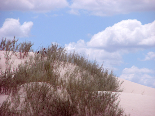 Something nostalgic about this dune…