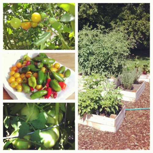 @amyleeisaacson; your #garden is out of control. (Taken with Instagram at East Nashville)