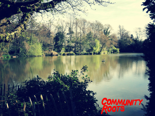 "Community Roots - ""Dino Swamp""  Who remembers being a child paddling around this pool?? Picture taken by our good friend Cris Fernandez-Cea"