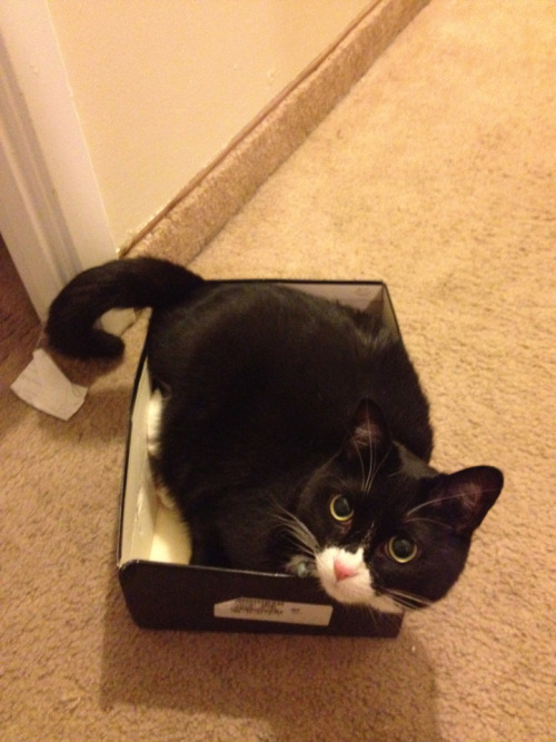 Shoebox kitty.