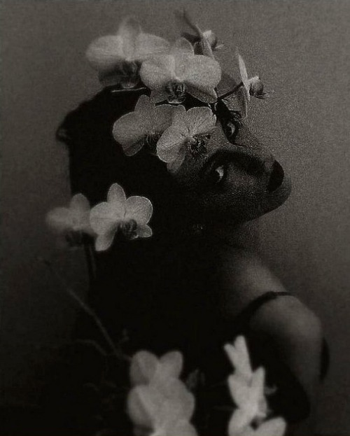 Untitled (Flowers) by Lydia RobertsAlso
