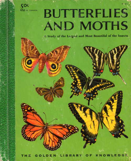"""Butterflies and Moths, A Study of the Largest and Most Beautiful Insects,"" by Richard A. Martin, Illustrated by Rudolf Freund, James Gordon Irving, Eloise Wilkin.  Golden Press, 1958.  This was given to be my parents in 1961.  From the personal collection of Jumbled Planet."
