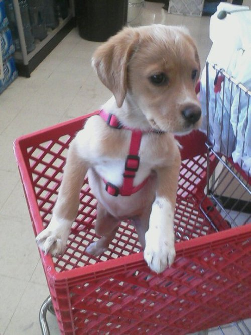 cute-overdose:  Brought my little buddy to the hardware store with me. more cute here