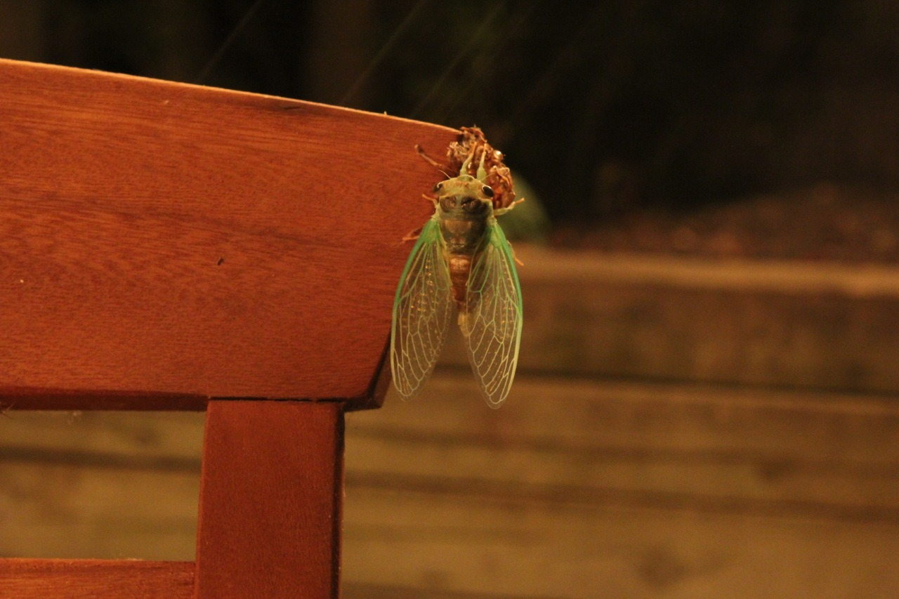 Who knew cicadas were so beautiful? Stephanie captured this moment a few weeks ago in our backyard.