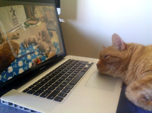 Love Meow - for Ultimate Cat Lovers - Baba the Cat Loves Watching Live Feed of Puppies