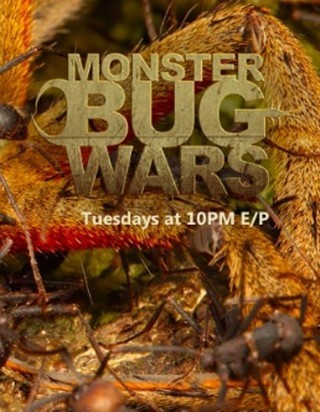 "I am watching Monster Bug Wars                   "":) This is cool!""                                Check-in to               Monster Bug Wars on GetGlue.com"