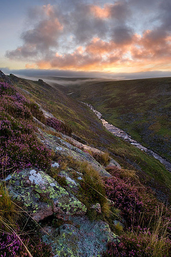 chasingthegreenfaerie:  Dartmoor, Cleave Heather by @alexnail on Flickr.