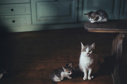 photogenicfelines:  (Malbork)