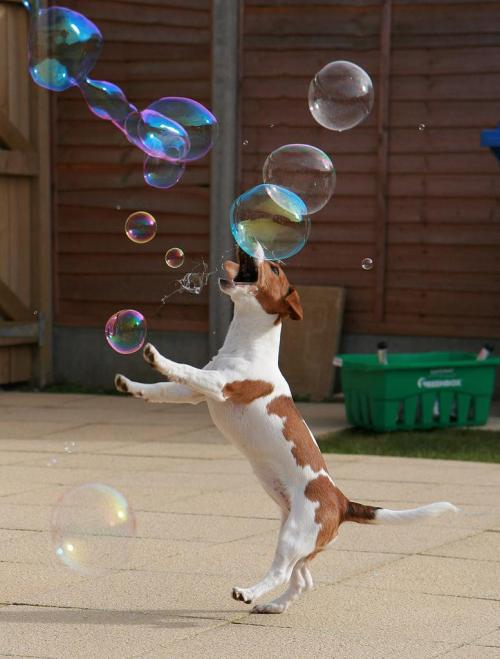 Gobbling the Bubbles By:connie.Todays Cuteness for the Dog Lovers:)